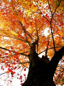 alitas-autumn-tree