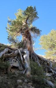 boundary-tree