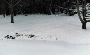 deer-bed